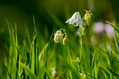 White Rural Flowers. Blooming Flowers. Beautiful White Flowers In Green Grass. Meadow With White Wil poster