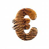 Tiger euro currency sign - 3d Feline fur money symbol isolated on white background. This alphabet is poster