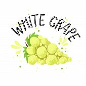 Vector Hand Draw White Grape Illustration. Yellow Grapes With Juice Splash Isolated On White Backgro poster