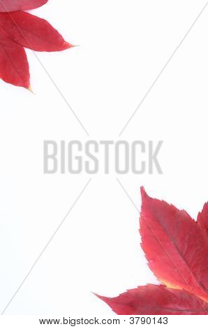 Red Leafs Frame