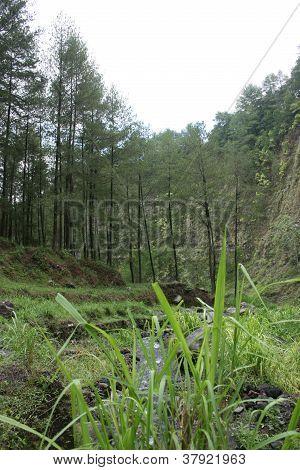 the slopes of Mount Merapi