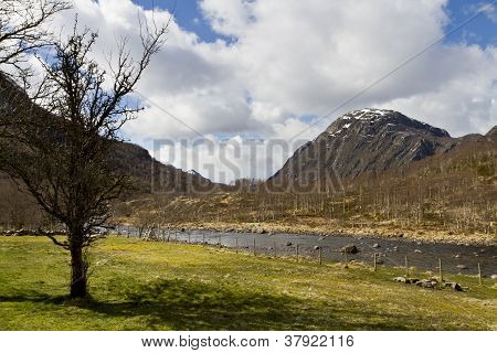Tree With Grassland And Mountains