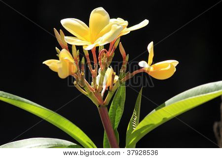 Exotic Hawaiian Flower