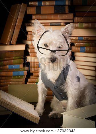 Librarian Dog