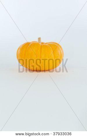 Mini Ornamental Pumpkin With Small Stem