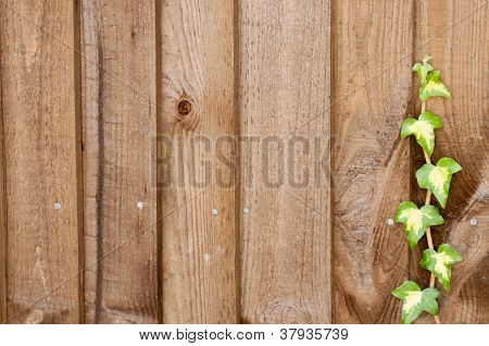 Ivy Climbing Up A Fence
