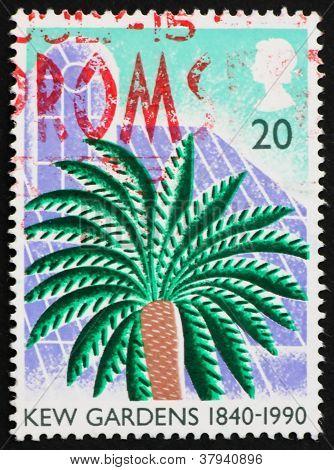 Postage stamp USA 1990 Cycad, KewGardens