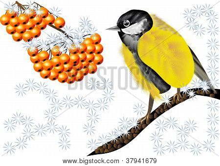 Bird And Winter Berries