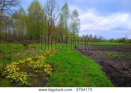 Spring Merry Brook