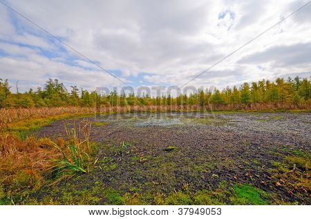 Wetland Bog In The Midwest