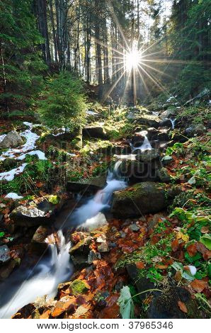 Spring Running Through Forest With Sun Beams