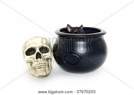 Black Kitten In Caldron