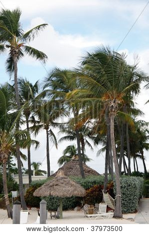 Huts and palms