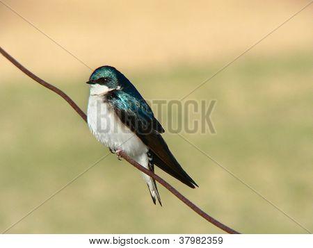 Bird On A Wire 2