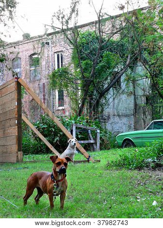 Dogs And Rundown Building