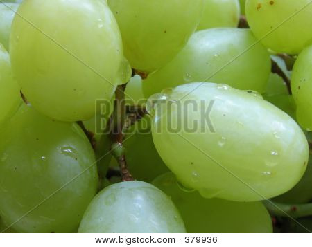 Closeup Of Freshly-washed Grapes