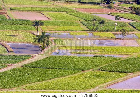 Fields Of Hanalei Valley