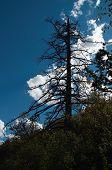 Black Tree And Deep Blue Skies poster