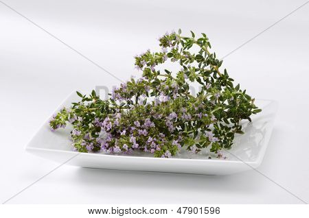 Thyme Blossom Leaves