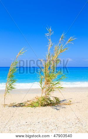 Sandy beach with bamboos Lefkas Greece