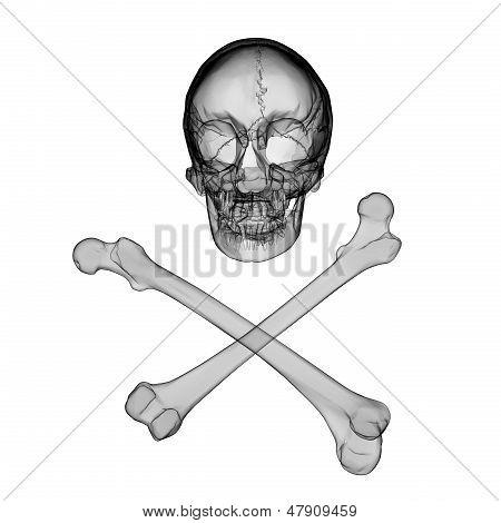 Skull And Crossbones - A Mark Of The Danger Warning