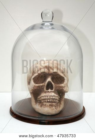 A Styrofoam, human skull in a glass bell jar on a white background. Representing Halloween, Medical Studies, Strange Concepts, Fun, Isolation, Being on Display and more. Perfect image for Halloween