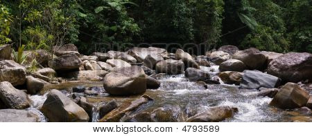 Stony River In The Forest