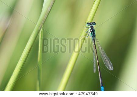 Insect, Macro, Bug, Damselfly