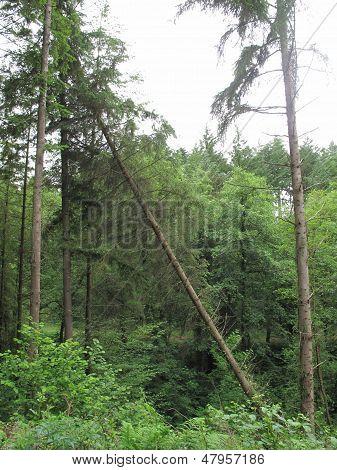 Fallen Tree Forest Landscape