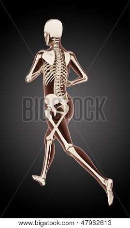3D render of a female medical skeleton running