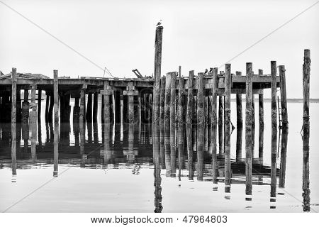 Weathered And Worn  Pier At Bodega Bay