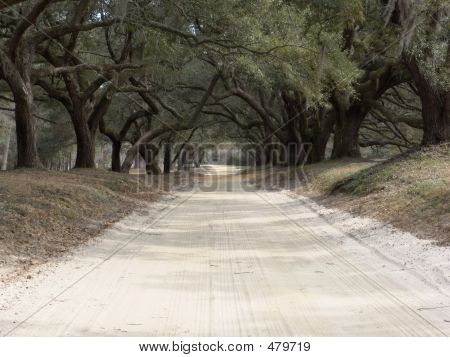 Oak Lined Road