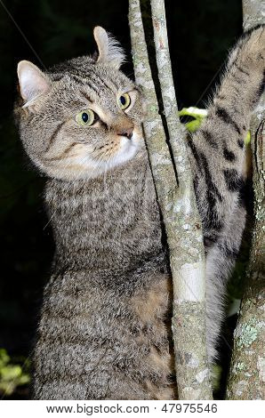 Cat In A Tree With Black Background