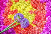 pic of pom-pom  - background of tightly bunched flowers and floral pom - JPG