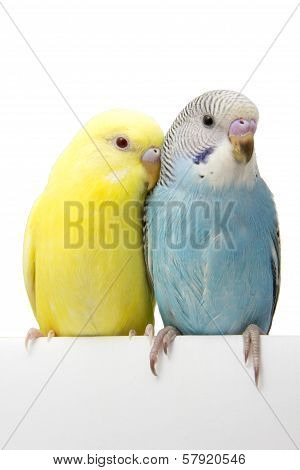two young birds are on a white background