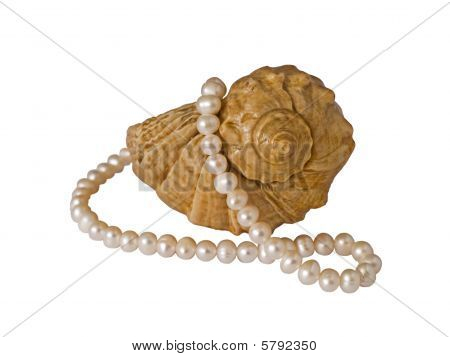 Sea seashell and pearl