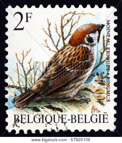 Postage Stamp Belgium 1989 Eurasian Tree Sparrow, Bird