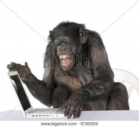Portrait Of Chimpanzee Playing With A Laptop, against white background Studio Shot