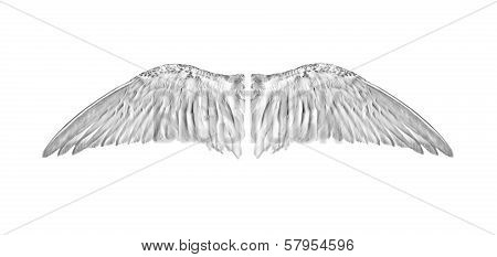 Pair of white angelic bird wings from inside