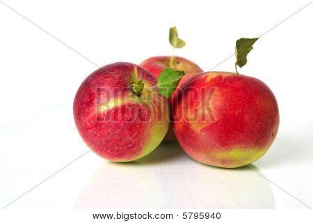 Three Fresh Picked Apples