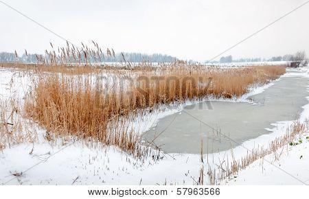 Yellowed Reeds Around  Frozen Water