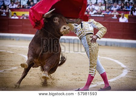 Spanish Bullfighter Bullfighting Giving A Spectacular Chest Pass With The Crutch In The Bullring Of