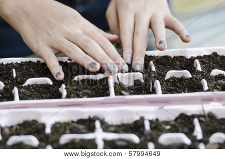 Patting Seed In Place