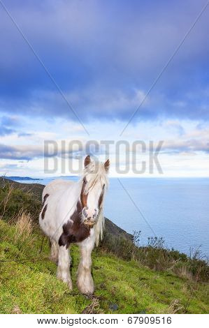 White And Brown Horse On The Mountain