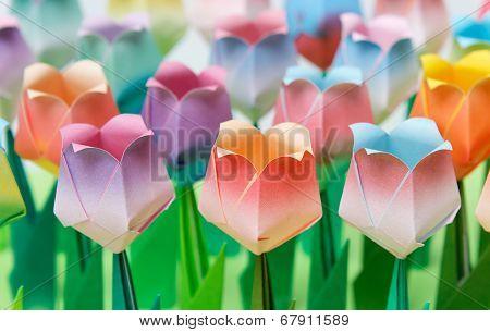 Paper Tulip Field