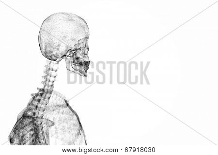 Transparent skeleton graphic in black on white background