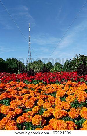 Crystal Palace Transmitting Station (mast)