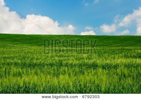 Bright Green Wheat Field