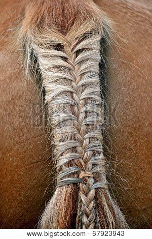 Braided Horse Tail