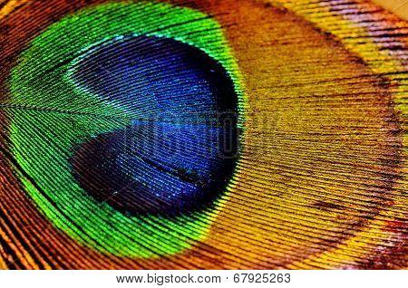 Peacock Leaf Detail